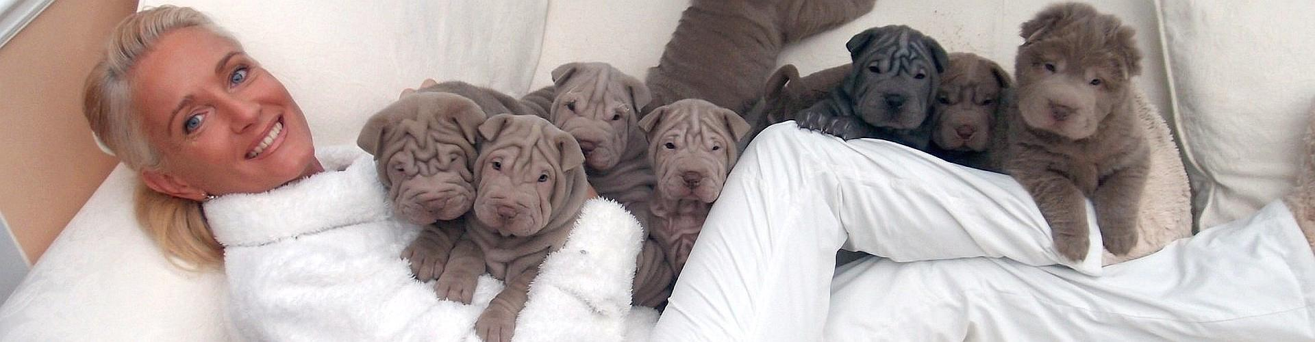 My wife with 8 Shar-pei puppies